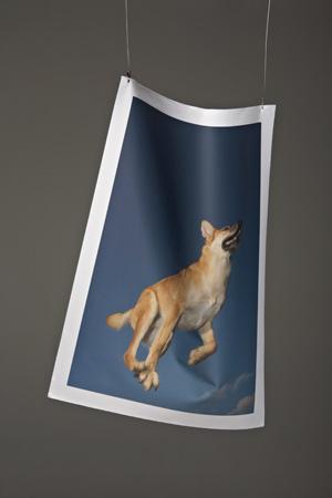 Bild ohne Plakathänger